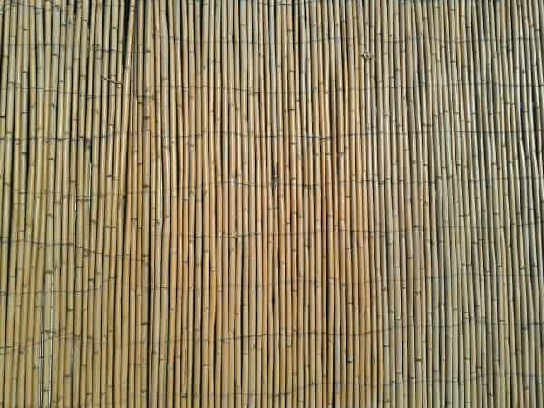 bamboo, fence, natural